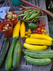 Produce of the veg plot