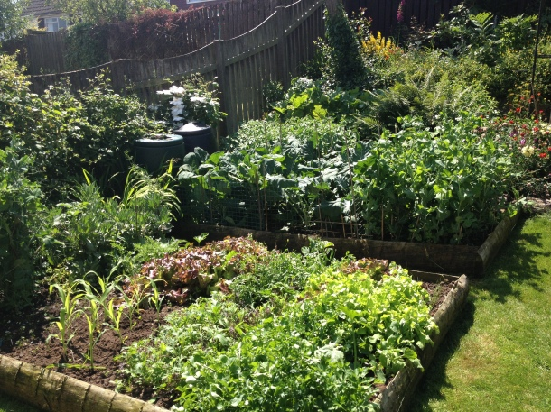 Raised beds - my Peter built these 3 years ago from off cuts from the local timber yard