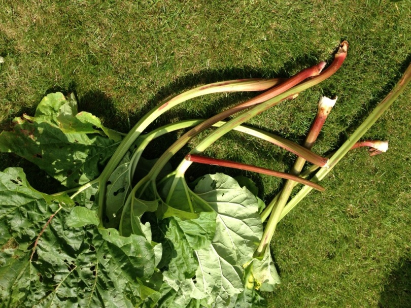 1kg of rhubarb stalks