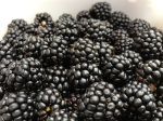 Blackberry bounty