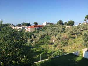 The olive groves from our balcony