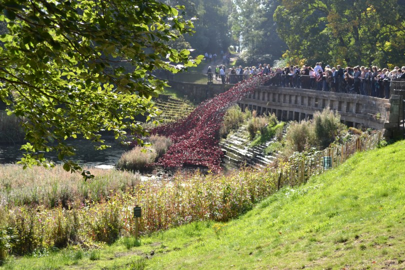 YSP Poppy Wave