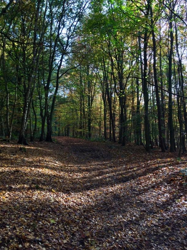 Newmillerdam autumn trees.