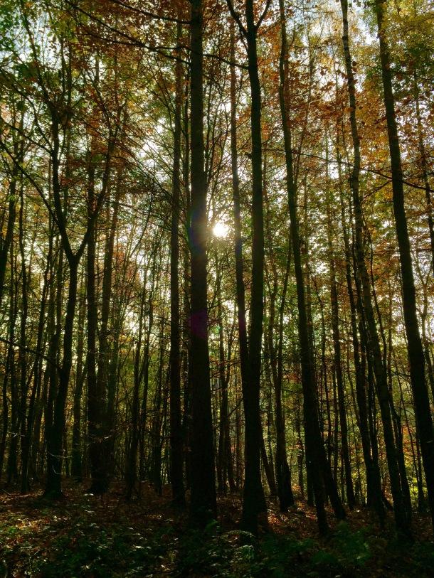 Newmillerdam autumn trees